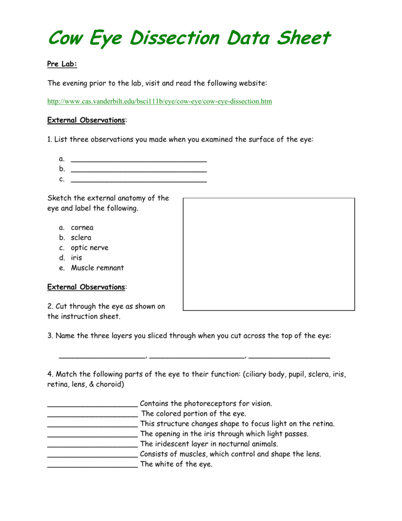 Worksheets Cow Eye Dissection Worksheet 008786663 1 f26114777f638348e0a7af9695660730 png