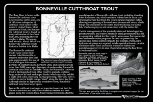 The Bear River is home to the Bonneville cutthroat trout