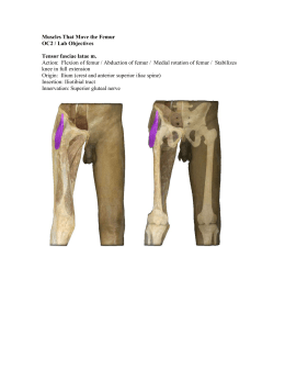Muscles That Move the Femur OC2 / Lab Objectives Tensor fasciae