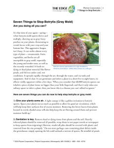 Seven Things to Stop Botrytis (Gray Mold)