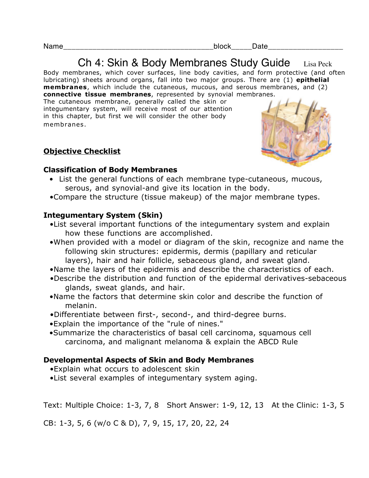 Ch 4 Skin Body Membranes Study Guide Lisa Peck