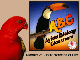 Characteristics of Life - the American Federation of Aviculture