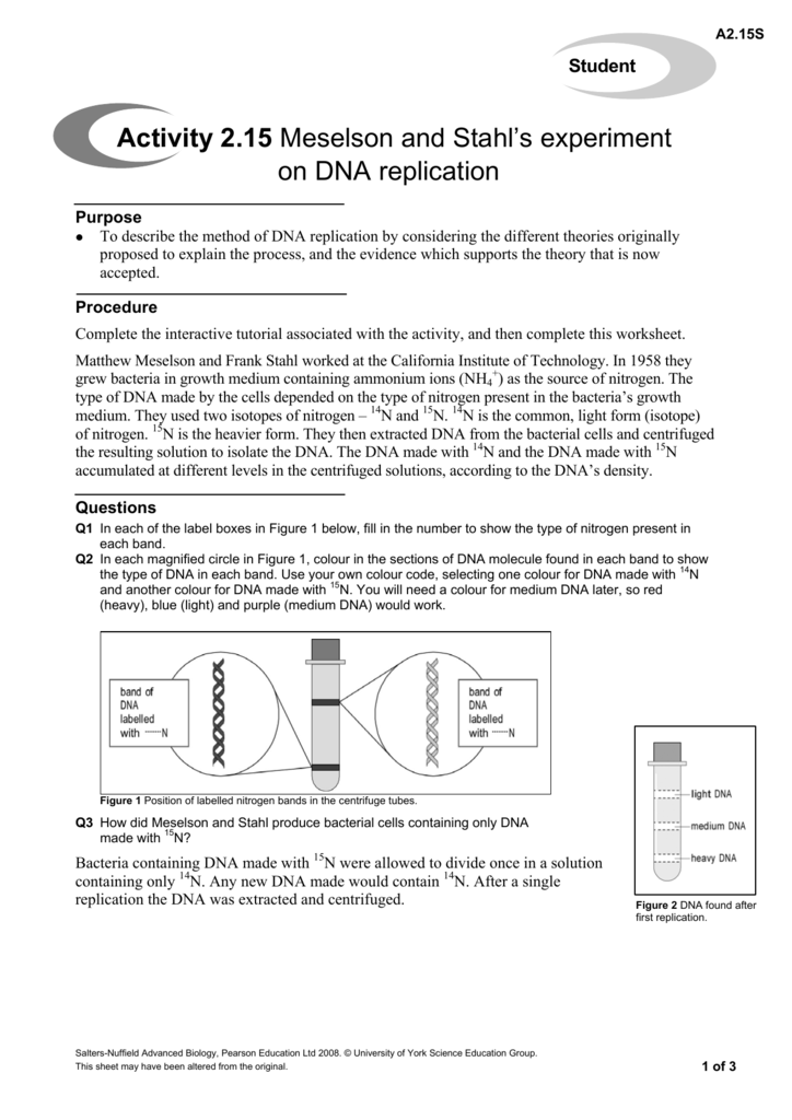 Activity 215 Meselson and Stahls experiment on – Dna Replication Activity Worksheet