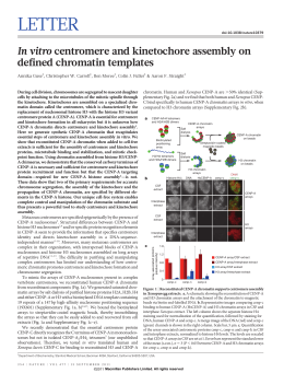 In vitro centromere and kinetochore assembly on defined chromatin