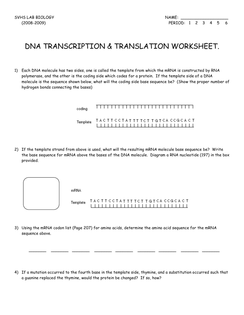 Worksheets Transcription And Translation Worksheet Answers dna transcription translation worksheet