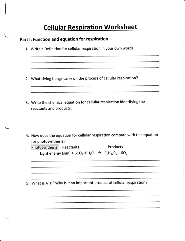 Worksheet Cellular Respiration Worksheet Thedanks Worksheet For