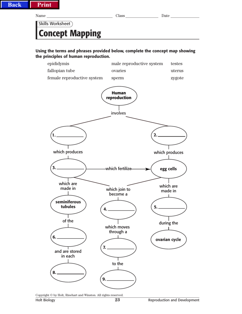 worksheet Human Reproduction Worksheet repro concept map