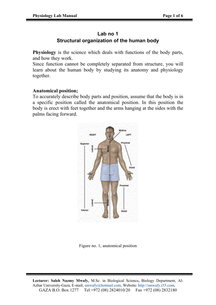 Lab No 1 Structural Organization Of The Human Body Physiology Is