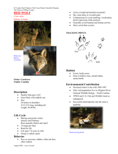the Red Wolf PDF File.