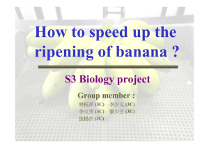 How to speed up the ripening of banana ?