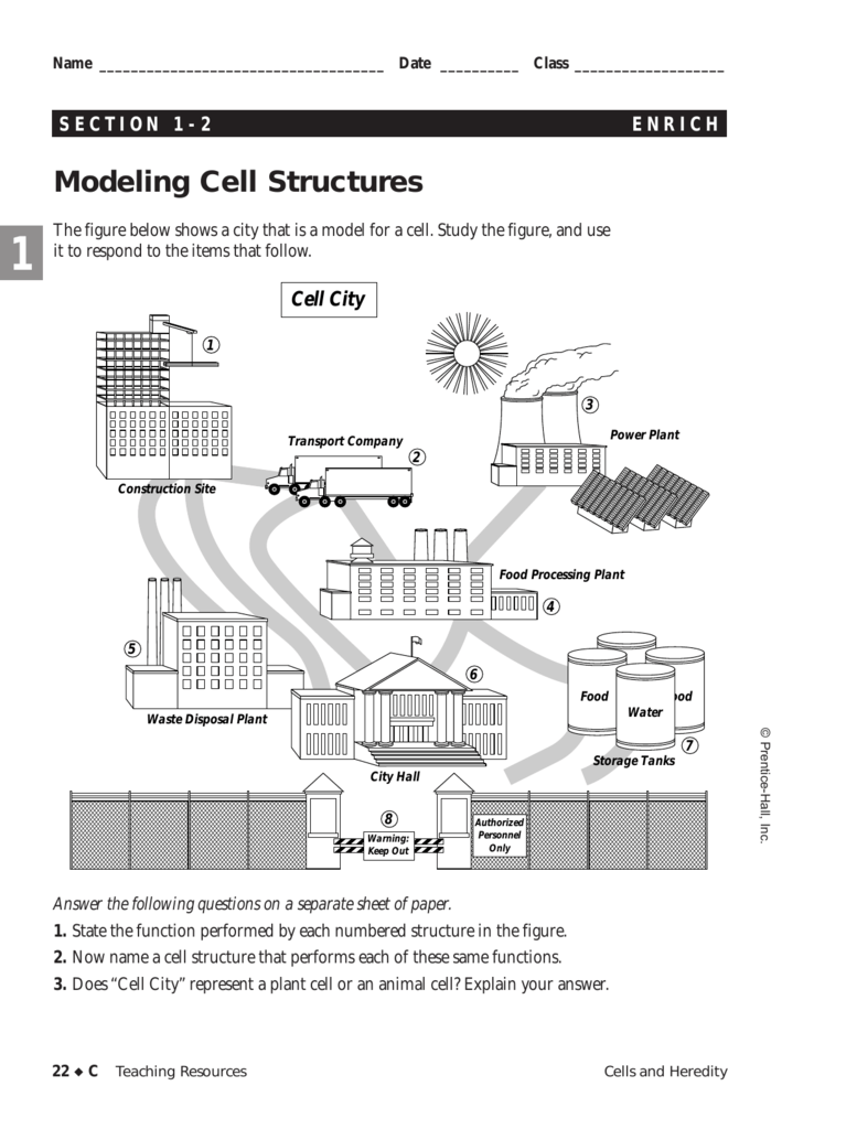 Modeling Cell Structure 3d Plant Diagram A