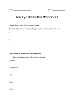 grade 6 cow eye dissection. Black Bedroom Furniture Sets. Home Design Ideas