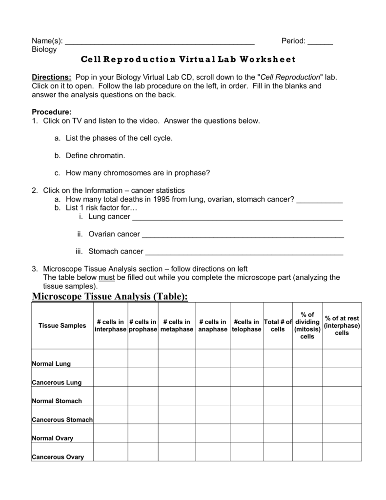 Worksheets Virtual Lab The Cell Cycle And Cancer Worksheet Answers names