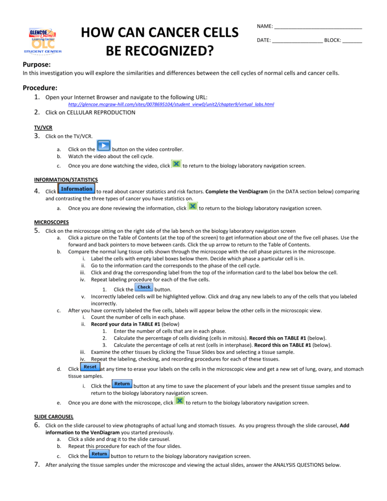 worksheet Virtual Lab The Cell Cycle And Cancer Worksheet how can cancer cells be recognized