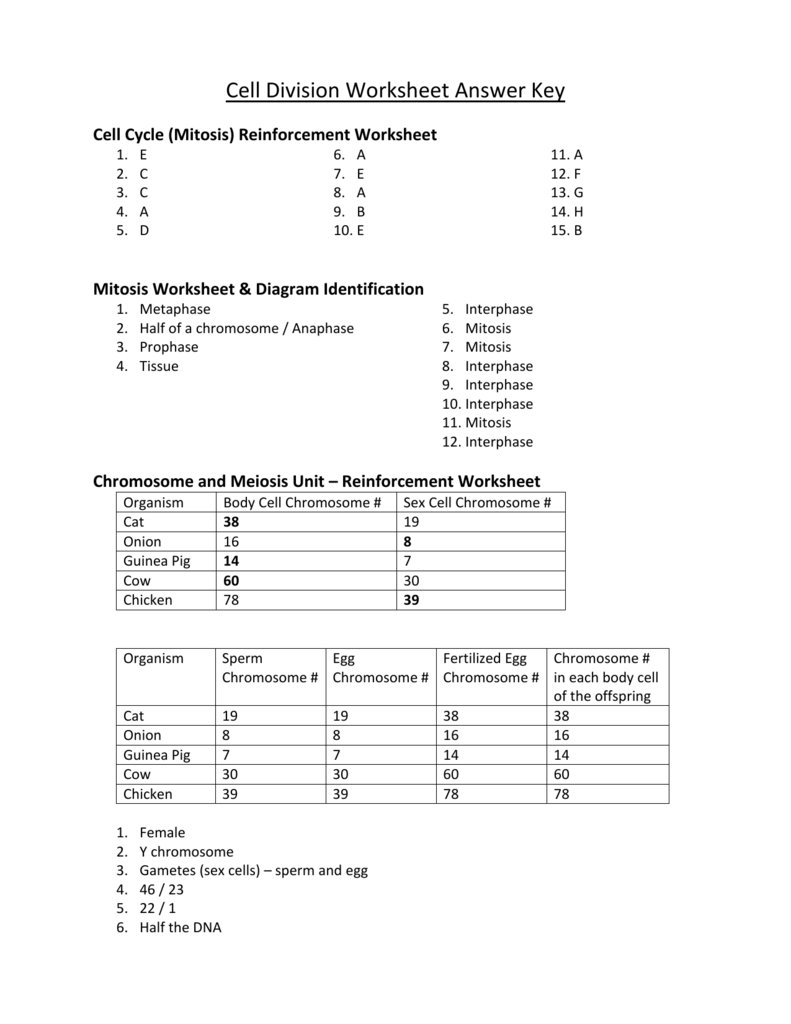 Worksheets Cell Growth And Division Worksheet 008857715 1 28ace7110029db86e66447c706b8615f png