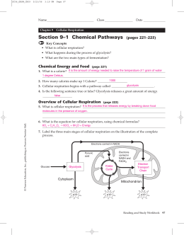 Section 9–1 Chemical Pathways - holyoke