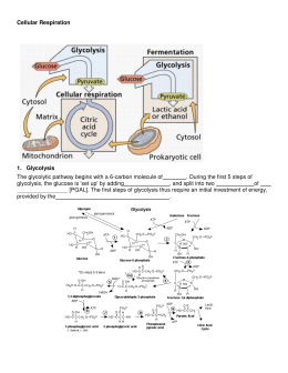 Answers to the respiration study guide glycolysis the glycolytic pathway begins with ccuart Gallery