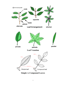 lab report on how bean effects cell respiration Identify variables, design and perform the experiment, collect data, analyze   determine the effect of temperature on the cell respiration of germinating seeds   answers will vary but may include temperature, type of seed, number of peas,  and.