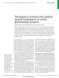 The sequence of events that underlie quantal transmission at central