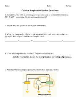 Cellular Respiration Review Questions