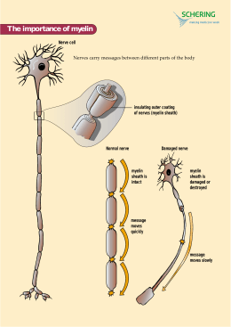 The importance of myelin