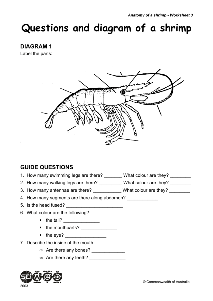 Questions and diagram of a shrimp