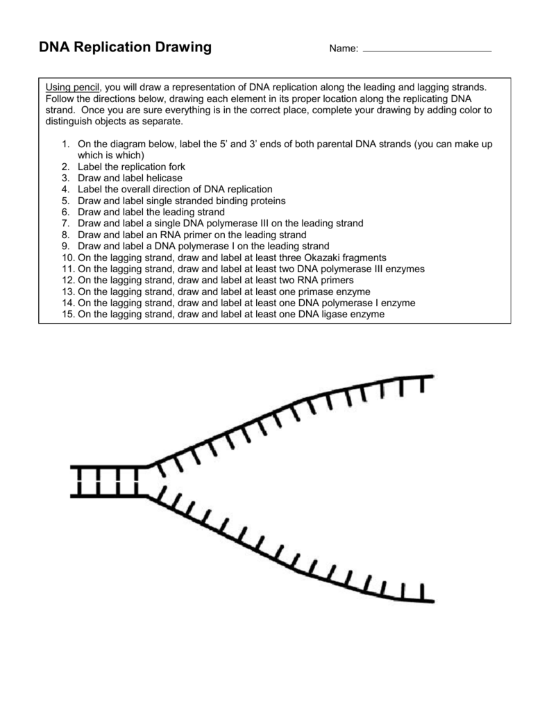 worksheet Dna Replication Practice Worksheet Answers dna replication fork drawing