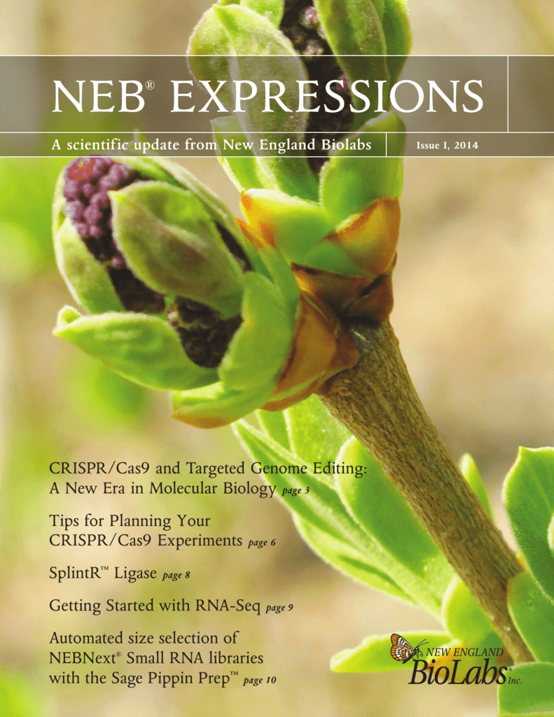 neb® expressions - New England Biolabs
