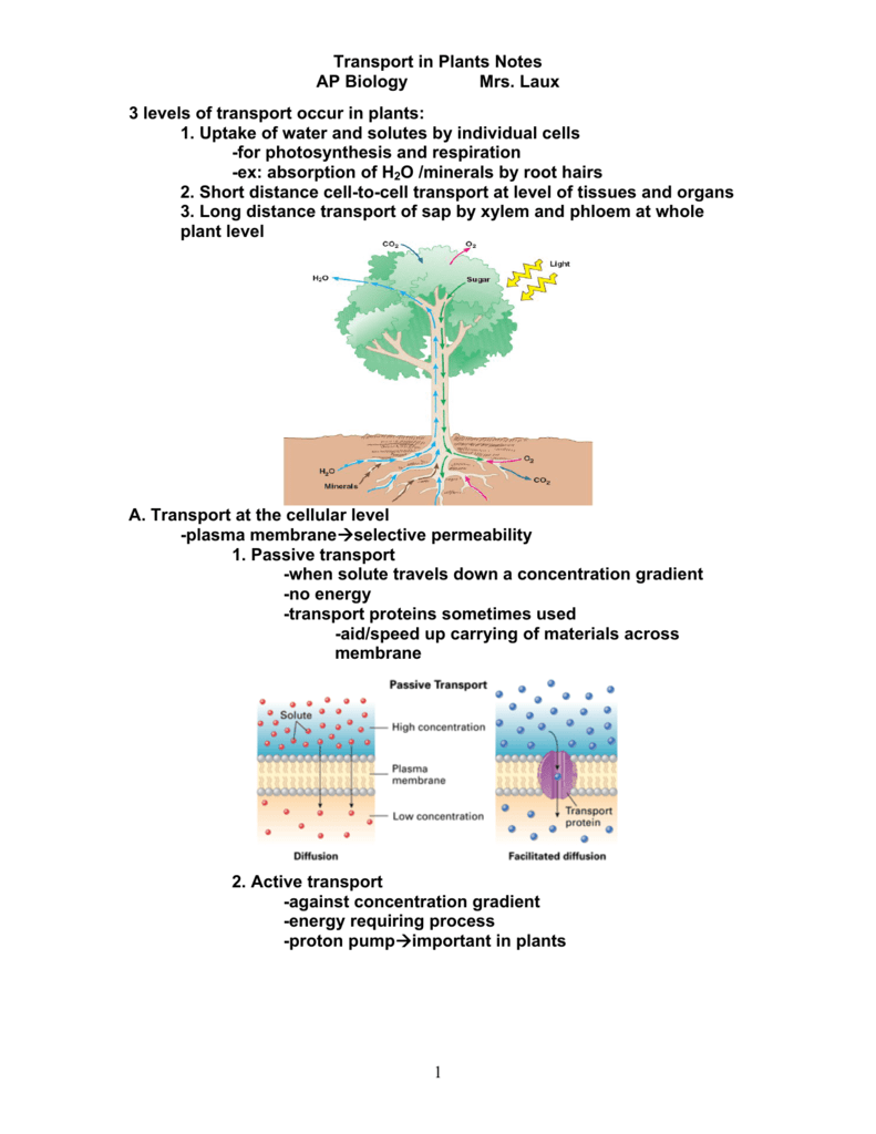 Transport in plants notes ap biology mrs laux 1 3 levels of ccuart Choice Image