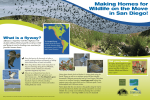 What is a flyway?