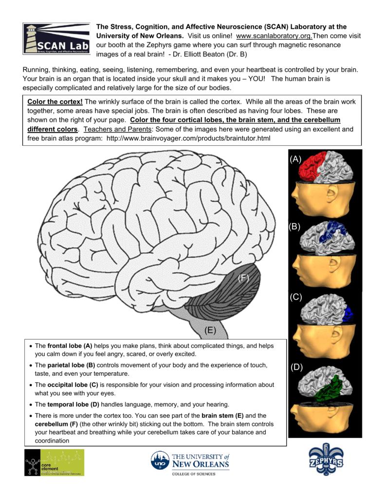 Baseball And The Brain