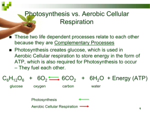 Photosynthesis vs. Aerobic Cellular Respiration