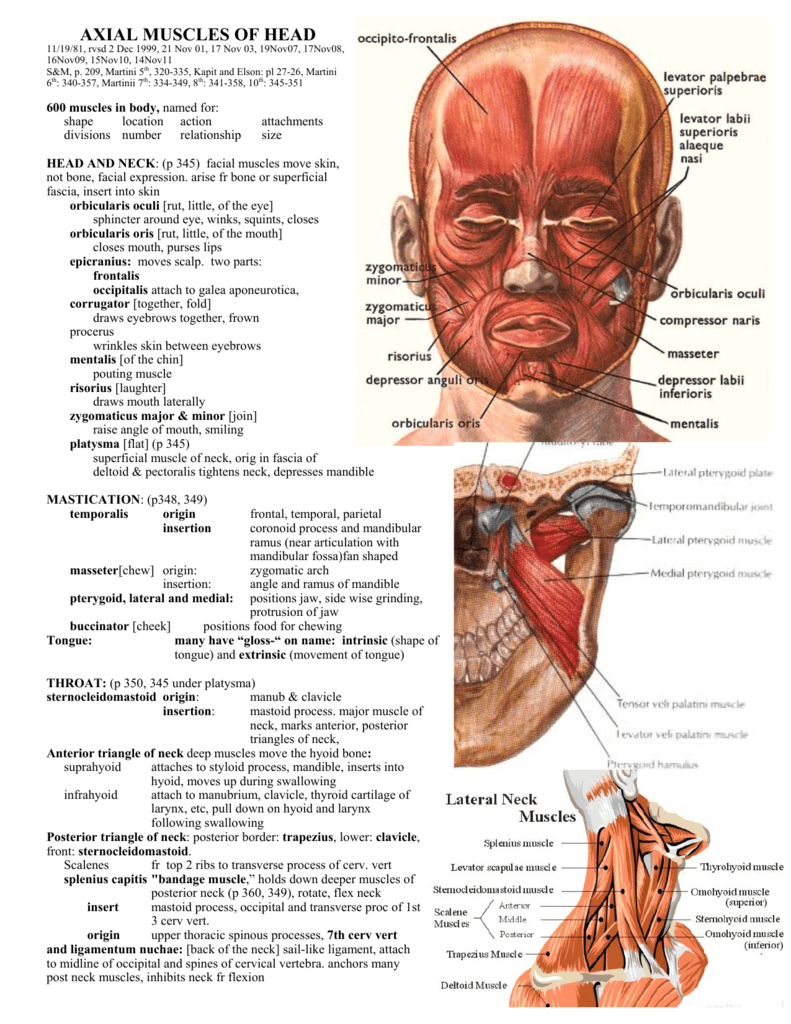 Axial Muscles Of Head
