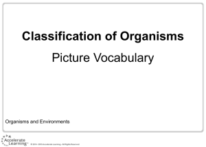 Classification of Organisms Picture Vocabulary