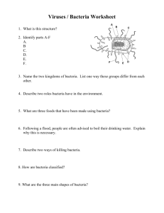 Viruses / Bacteria Worksheet