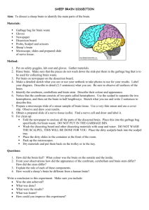 SHEEP BRAIN DISSECTION (Activity on page 212) - Timboon P