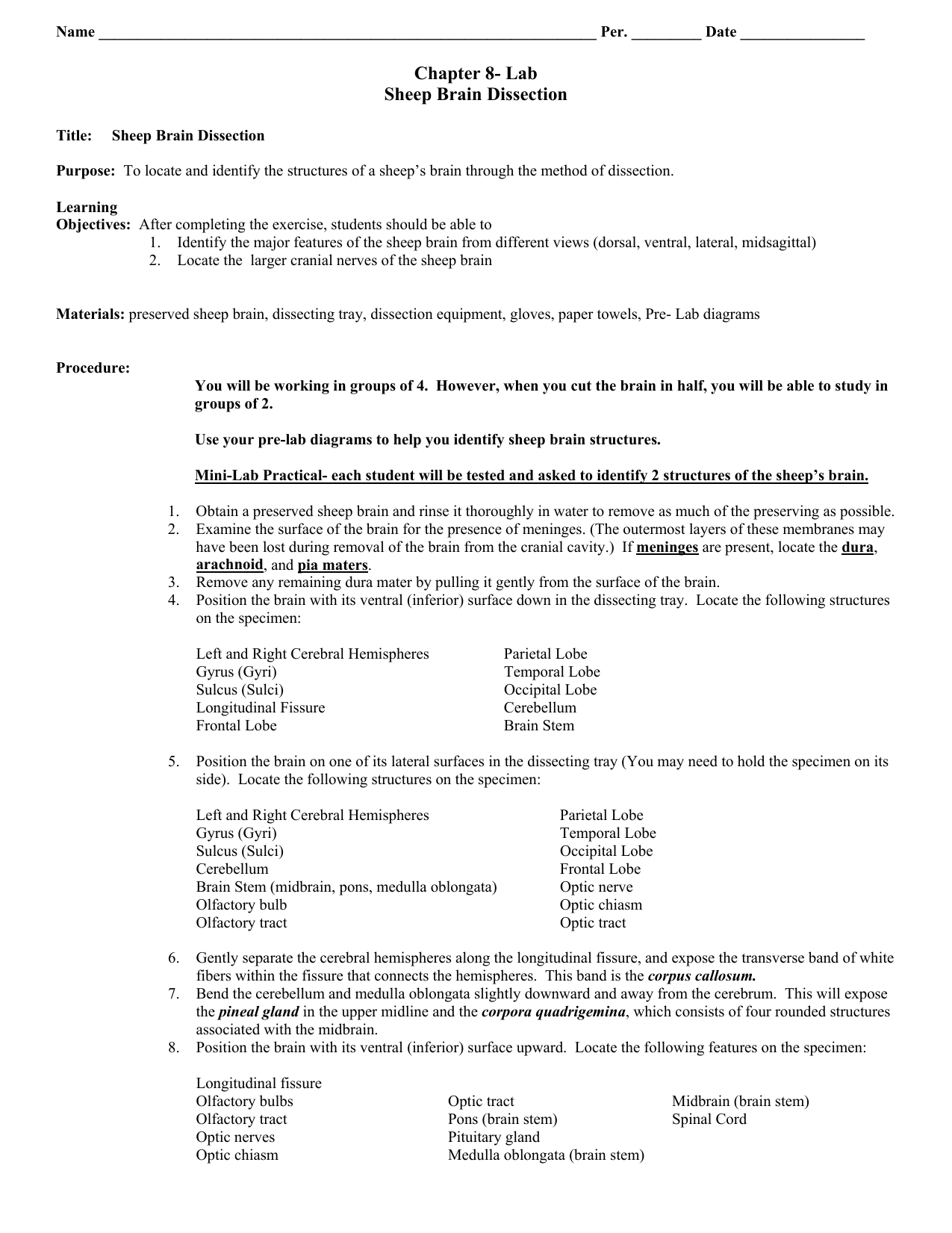 Chapter 8 Lab Sheep Brain Dissection – Sheep Brain Dissection Worksheet