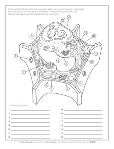 Ask A Biologist - Plant Cell Anatomy Activity