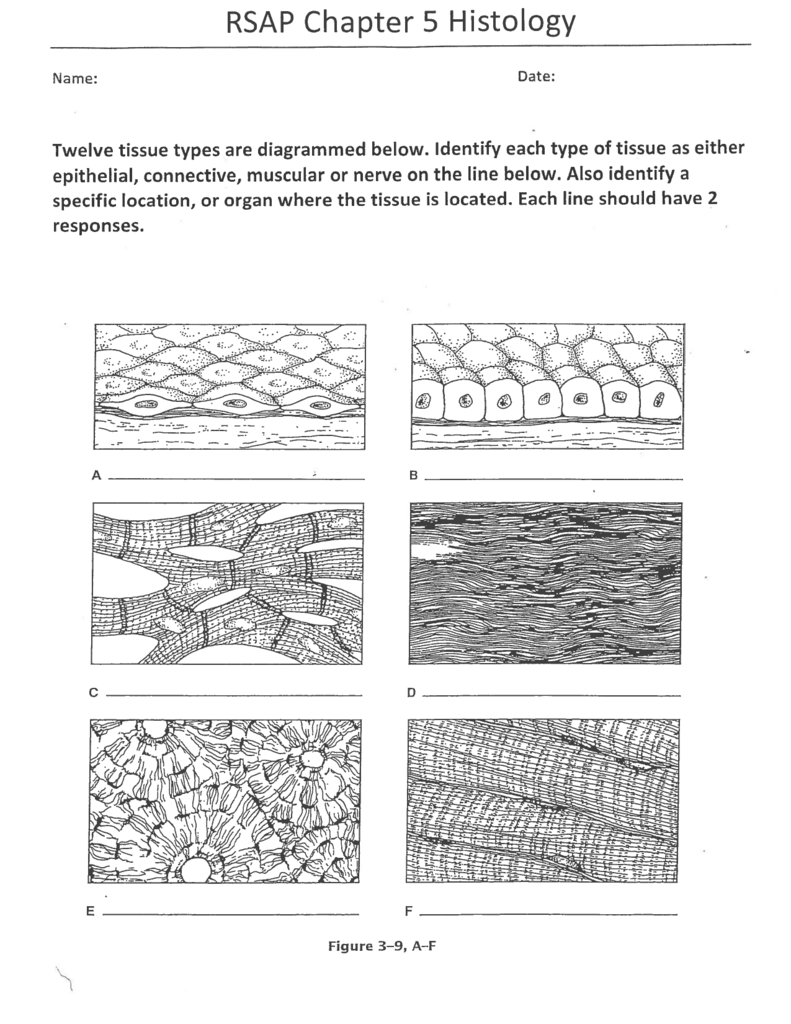 Connective tissue worksheet Research paper Sample