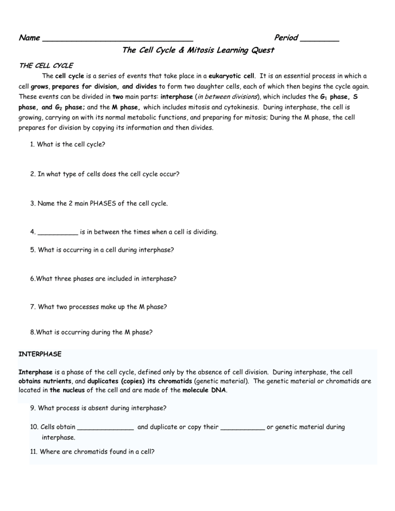 The Cell Cycle Mitosis Learning Quest – Phases of the Cell Cycle Worksheet