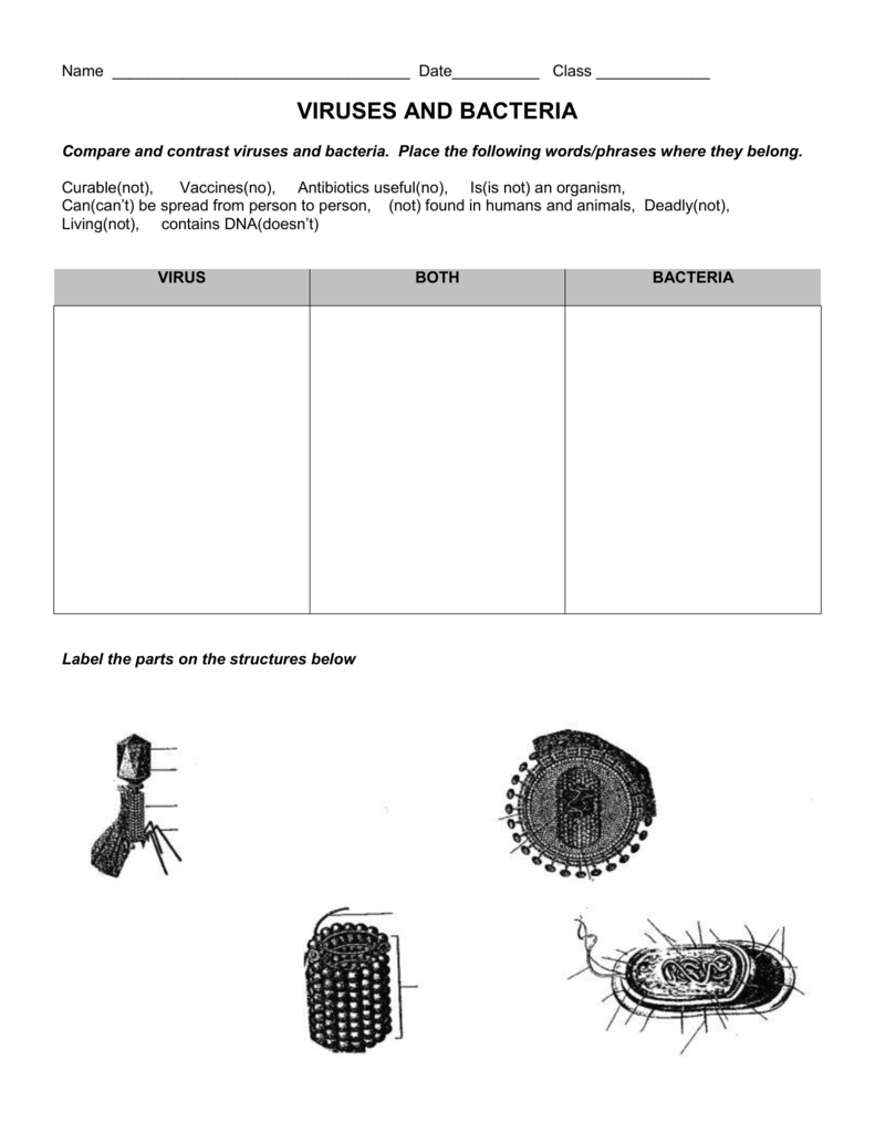 Worksheets Virus And Bacteria Worksheet virus and bacteria worksheet