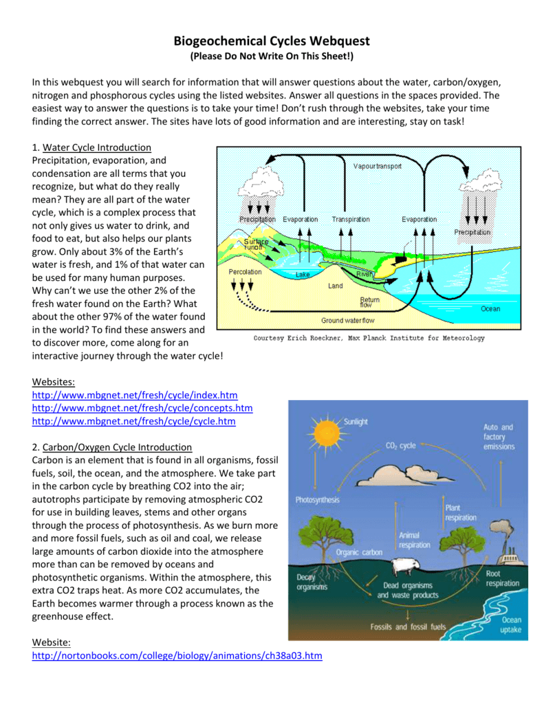 Biogeochemical Cycles Webquest – Water Carbon and Nitrogen Cycle Worksheet Answers