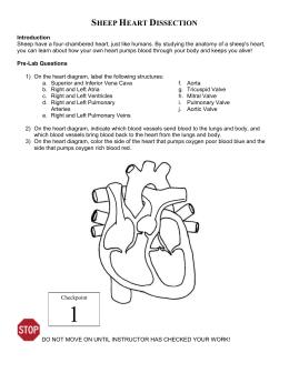 chapter 9 the cardiovascular system test. Black Bedroom Furniture Sets. Home Design Ideas