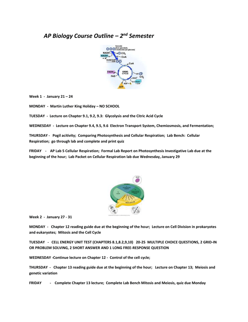 3 01 cell cycle lab report