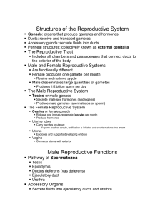Structures of the Reproductive System