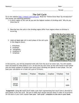 Cell Cycle Activity
