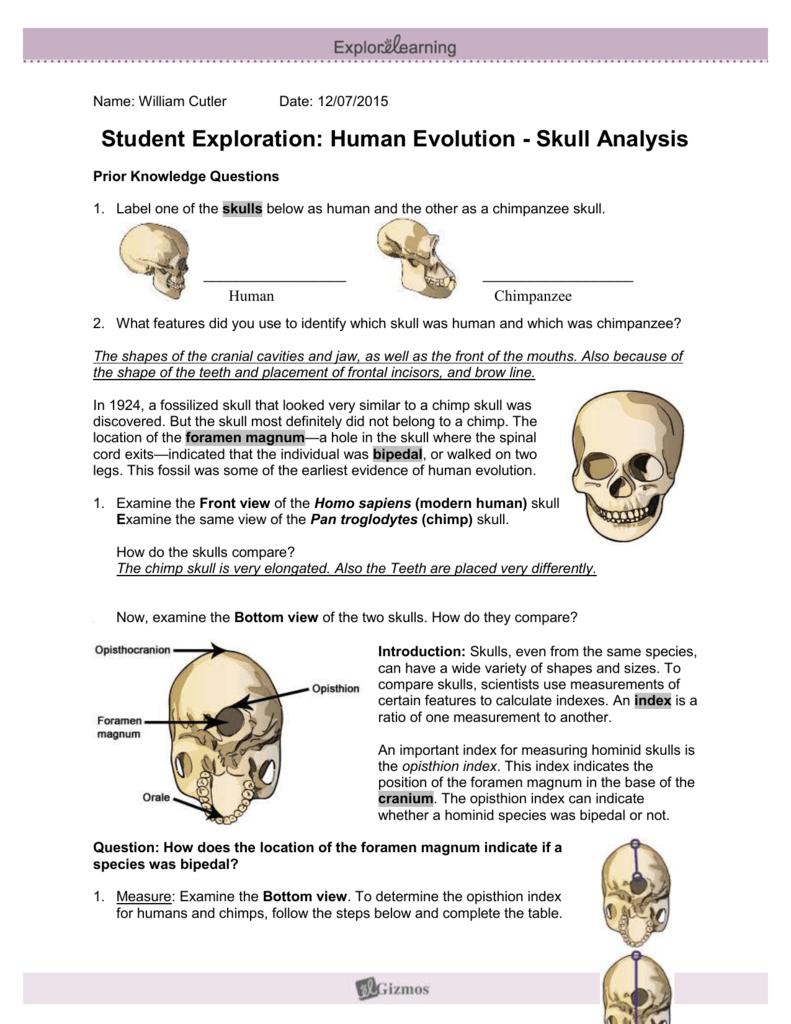 Homo Skulls Activity