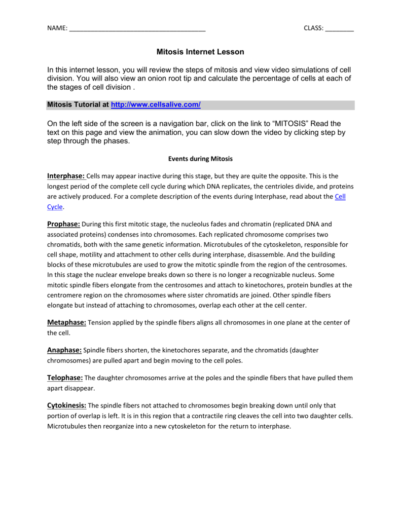 All Grade Worksheets Onion Cell Mitosis Worksheet All Grade – The Cell Cycle Worksheet