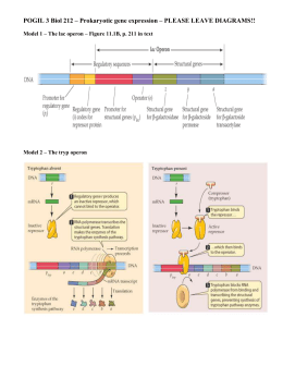 Gene Expression POGIL