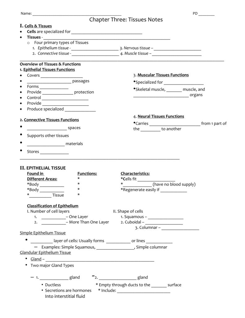 Chapter Three Part 2 Tissues Notes – Connective Tissue Worksheet